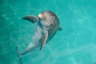 Cuadro Delfín de la República Dominicana