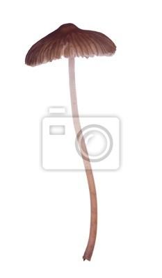 delgada seta marrón aislado
