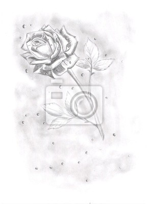 Dibujo A Lápiz De Bonita Rosa Pinturas Para La Pared Cuadros