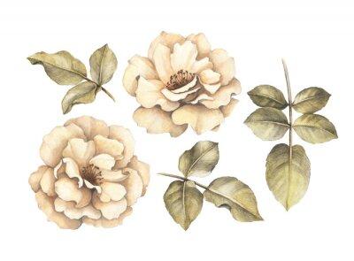 Cuadro Dibujo a lápiz de rosas