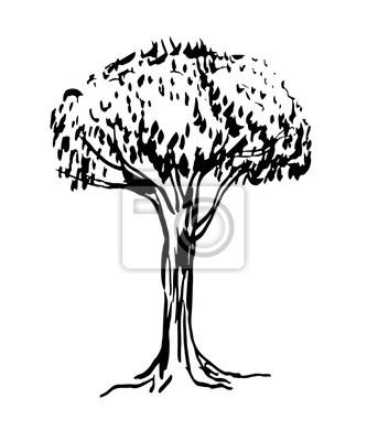 Dibujos Arbol Sin Hojas Dibujo árbol Sin Hojas Silueta Vector
