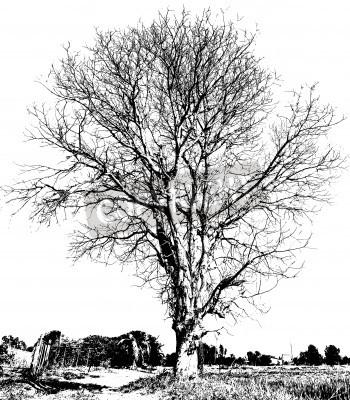 Dibujo en blanco y negro de un rbol seco sin hojas que for Que significa dibujar arboles secos