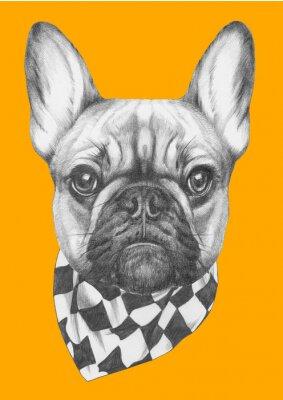 Cuadro Dibujo original de Bulldog francés con bufanda. Aislado en el fondo de color