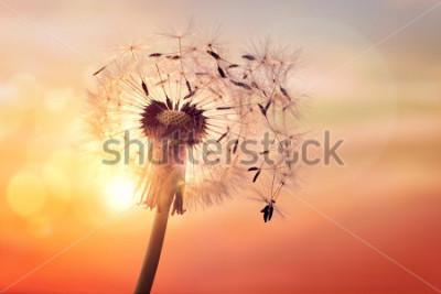 Cuadro Diente de león silueta contra la puesta de sol con semillas que soplan en el viento