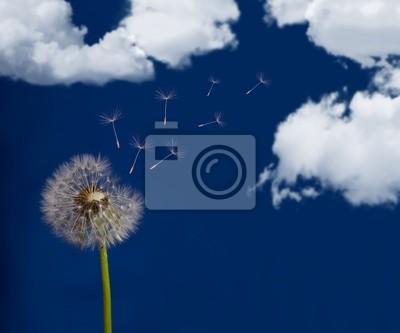 Cuadro diente de león y el cielo con nubes