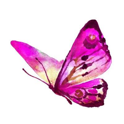 Cuadro diseño de mariposas