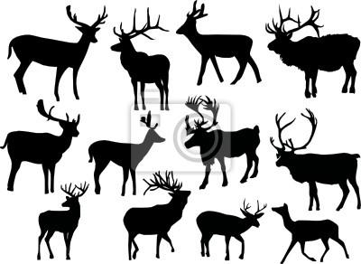 doce ciervos aisladas