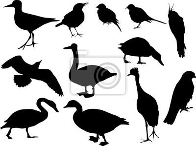 doce siluetas de aves