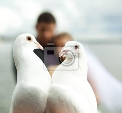 dos palomas y los recién casados