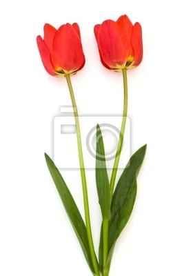 Dos tulipanes rojos aislados con trazado de recorte pinturas para la ... 4d27f43c0a21