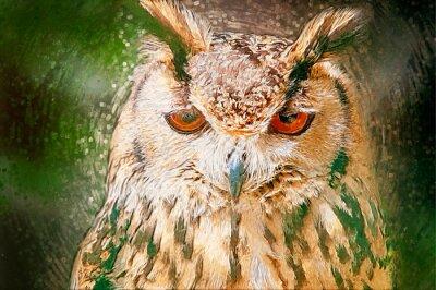 Cuadro Drawn Owl Portrait