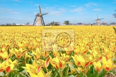 Dutch Campo de tulipanes amarillos rojos