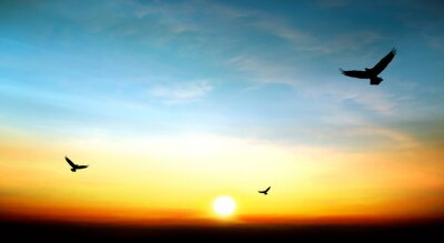 Cuadro eagle flying in the sky beautiful sunset