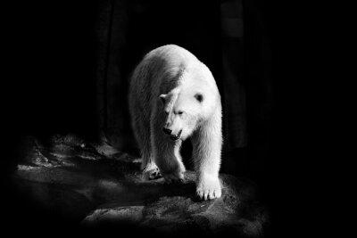 Cuadro Eisbär en Schwarzweiß