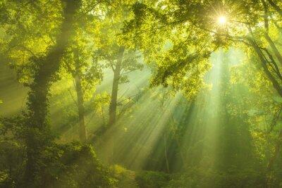 Cuadro El Bosque de los Cielos