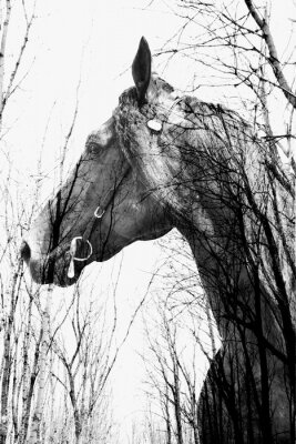 Cuadro El bosque dentro del caballo ina arte, multiexposición