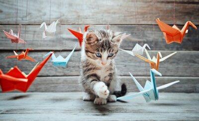 Cuadro El gatito está jugando con grullas de papel