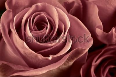 Cuadro El manojo de marsala coloreó el primer color de rosa de las flores como fondo. Enfoque suave, DOF superficial. Imagen filtrada