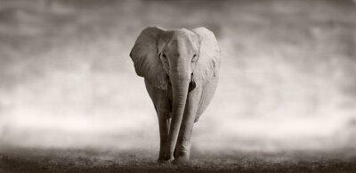 Cuadro elefante