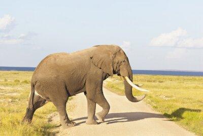 Cuadro Elefante africano en Kenia