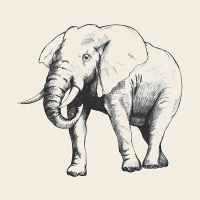Cuadro Elefante Bosquejo