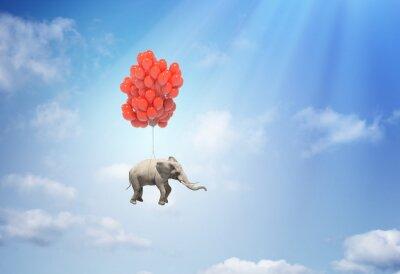 Cuadro Elefante con los globos