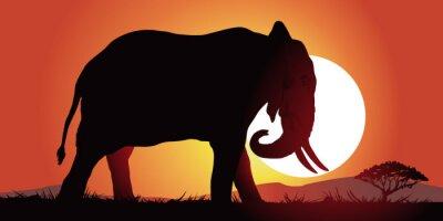 Cuadro Elefante-couche de soleil