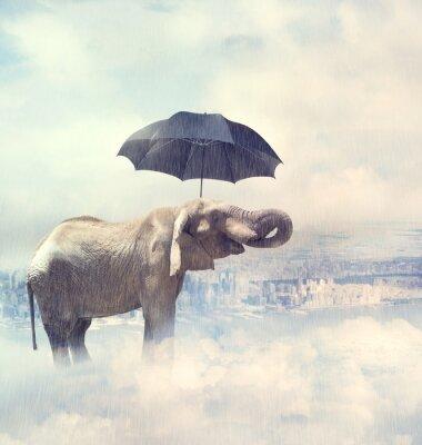 Cuadro Elefante disfrutando de la lluvia avobe la ciudad en las nubes