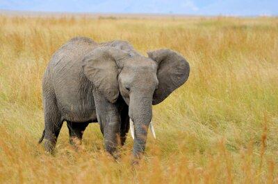 Cuadro Elefante en el Parque Nacional de Kenia
