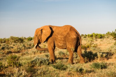 Cuadro Elefante en el Parque Nacional del este de Tsavo, Kenia