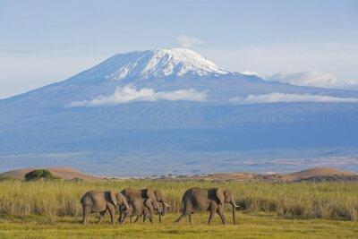 Cuadro Elefanten mit Kilimandscharo