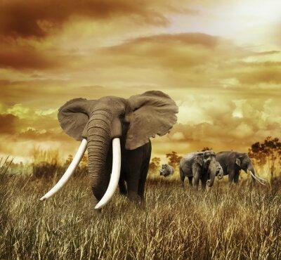 Cuadro Elefantes en la puesta del sol