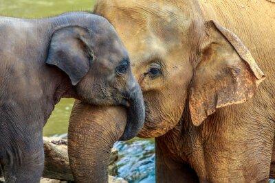 Cuadro elephant and baby elephant