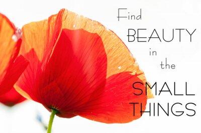 Cuadro Encuentra belleza en las cosas pequeñas. Motivación inspiradora cita