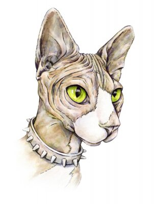 Cuadro Esfinge canadiense en un collar con espinas. Gato desnudo sobre un fondo blanco. dibujo acuarela