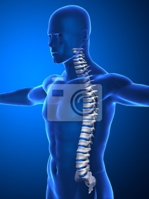 Espina dorsal humana con los discos intervertebrales pinturas para ...