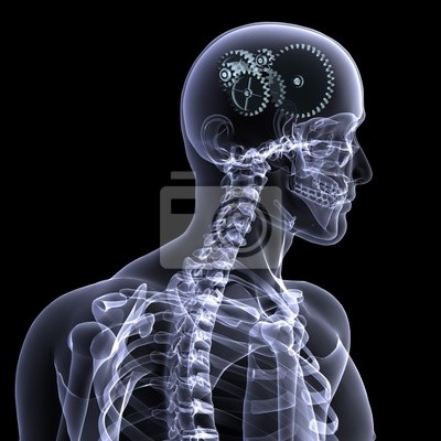Esqueleto de rayos x - ruedas una vuelta pinturas para la pared ...