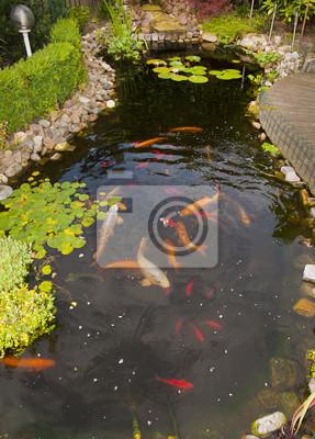 Estanque con peces koi y peces de colores pinturas para la for Peces para limpiar estanques