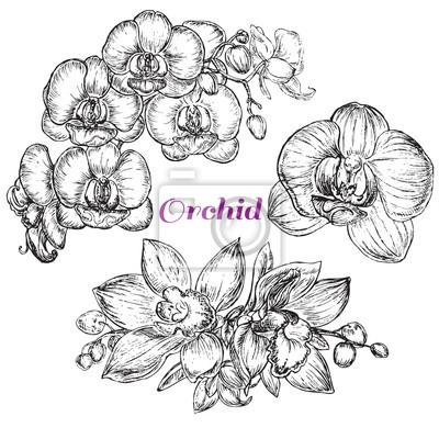 Cuadro estilo de dibujo orquídea negro