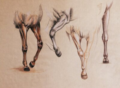 Cuadro Estudio de piernas de caballo