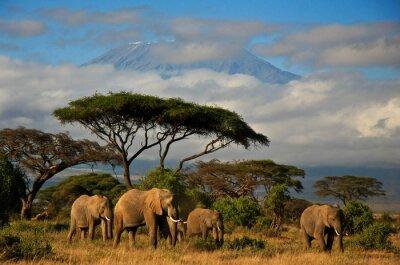 Cuadro Familia de elefantes en frente de monte. Kilimanjaro