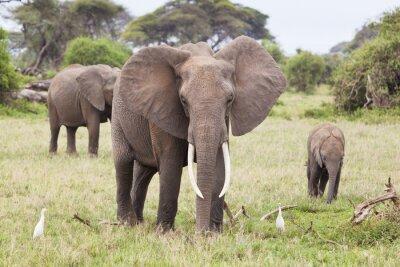 Cuadro Familia de elefantes en Kenia