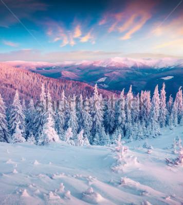 Cuadro Fantástico amanecer de invierno en las montañas de los Cárpatos con nieve encogida de árboles. Escena al aire libre colorido, concepto de la celebración de la Feliz Año Nuevo. Foto artística post proc