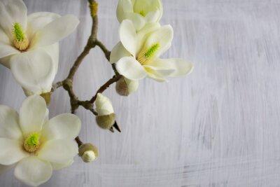 Cuadro Flor de la magnolia Flor