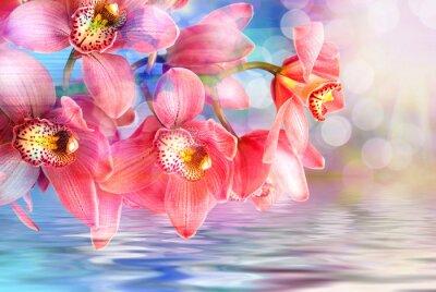Cuadro Flor de la orquídea de cerca