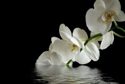 Cuadro flor de la orquídea de reflexión