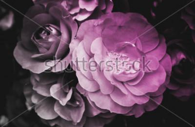 Cuadro Flor floreciente de la flor color de rosa hermosa. La foto representa el arbusto de flor color de rosa salvaje brillante delicado. De cerca, la vista macro. En blanco y negro