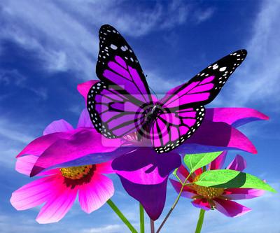 flor hermosa del cosmos clematis flor y mariposa contra th pinturas