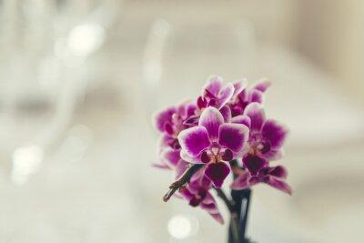 Cuadro Flor púrpura en flor en un fondo blanco cremoso