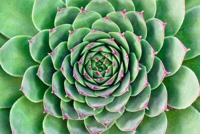 Cuadro flor verde